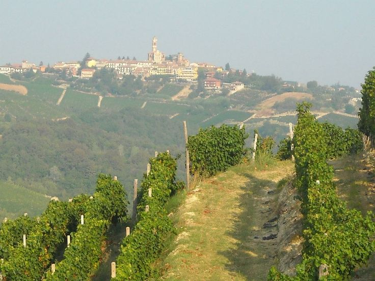 Vineyards and distant town, from the trails taken during the Trail del Moscato races | Sentieri e strade del Trail del Moscato #Piemonte #Piedmont #Italy