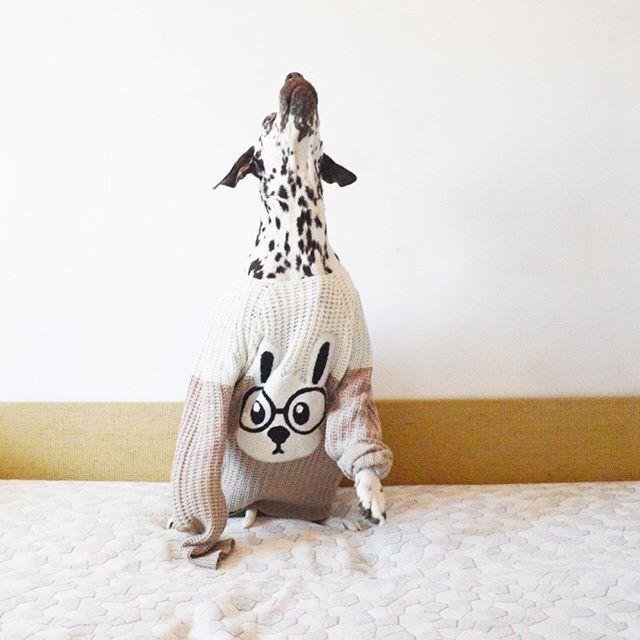My bunny! :3 Lilu_and_Lori Dalmatian  Далматин Лилу