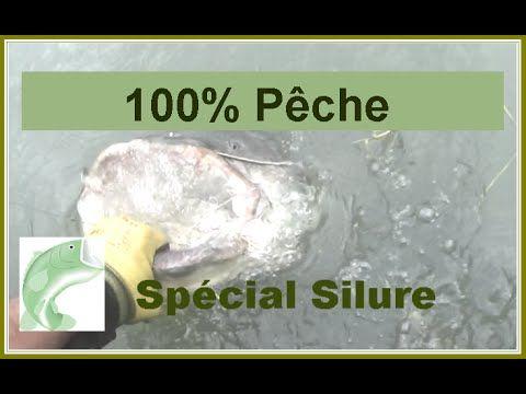 Pêche du silure - Poisson record au vif