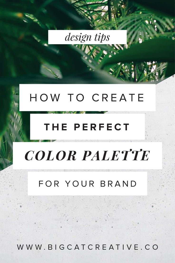 How to Create the Perfect Color Palette for Your Brand — Big Cat Creative | Color Scheme tips | Color Palette Tips | How to create a color scheme | How to design a color palette | Design Tips | Brand Design Tips | Color Scheme Formulas | Graphic Design Tutorials | Color Palette Formula | Premade Color Scheme