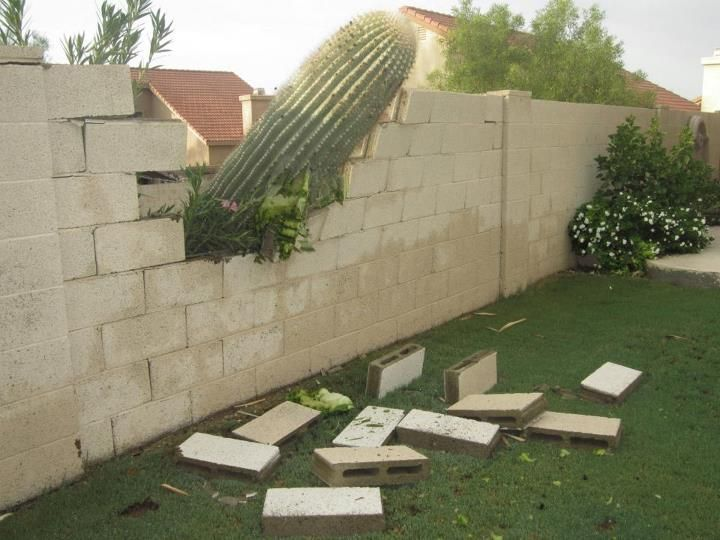:): Funny Pics, Cacti, Funny Pictures, Funnies, Humor, Neighbor, Photo, Cactus