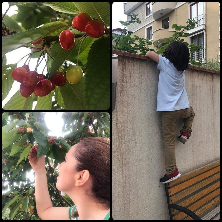 �� Ya nasıl güzel şeydir çocuk olmak, çocuk ruhunu taşıyabilmek��Komşumuzun kiraz ağacına ulaşabilmek için önce bahçe duvarına tırmanmak�� Ve mis kokulu kirazları dalından koparıp tadabilmek �������� #bahar #oksijen #temizhava #aktivite #kalitelizaman #aliçınar #anneoğul #doktormom #doktoranne #kirazmevsimi #kiraz #kirazağacı #bahçe #bahçeduvarı #tırmanma http://turkrazzi.com/ipost/1523791417318468353/?code=BUlmDh9DmsB