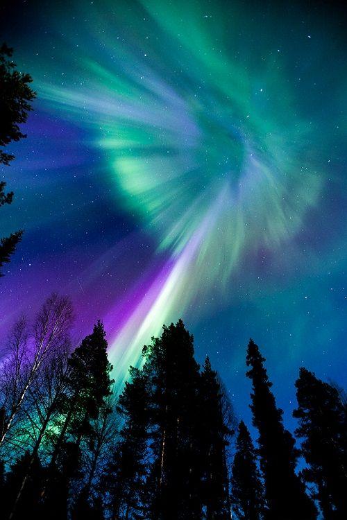 ponderation:  Purple Rain by AuroraAddicts