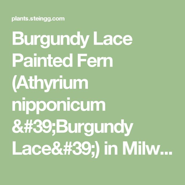 1000 ideas about lace painting on pinterest spray paint - Stein s garden home green bay wi ...