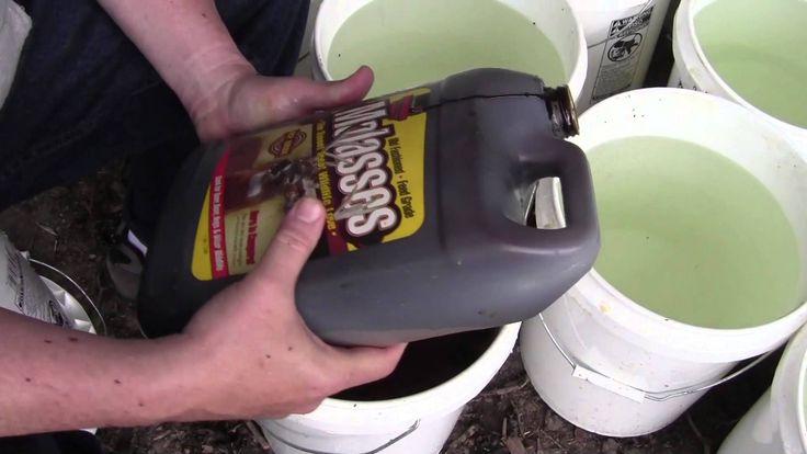 Short video, showing how I spread morel mushroom spores in my yard. October 2, 2015.