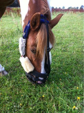 Det Kreative Hestemenneske: GreenGuard go home! DIY improve your grazing muzzle from my own blog