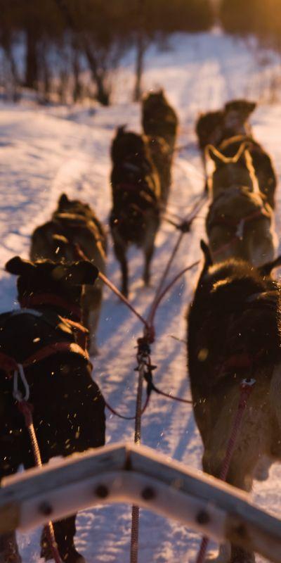 Hundekjøring deluxe er et ekte norsk eventyr! Å bli trukket av hundespann er noe alle burde få oppleve en gang i livet. Gi bort et gavekort til dem som er både glad i storslåtte vinterlandskap og dyr.
