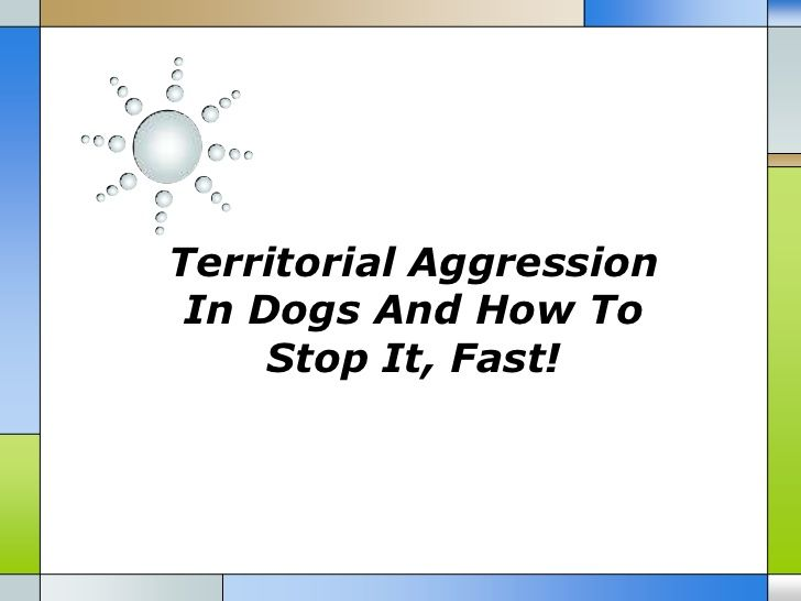 Canine agression quick style