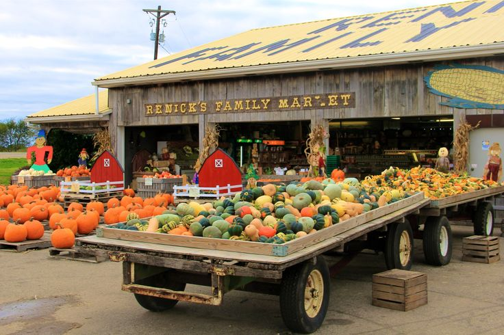 12 Ways to Enjy Fall in cbus | Renick's Pumpkin Patch | girl about columbus