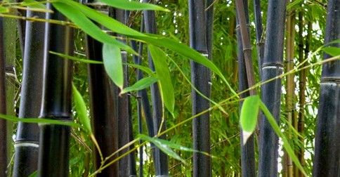 Spring Black Bamboo Giveaway