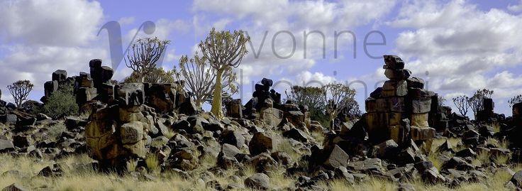 Namibia - Drzewa Kołczanowe