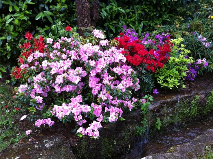 Decoración floral en las instalaciones de  Casa Grande de Fuentemayor     #opinion #opiniones #bodas #galicia  #pazo #encanto #casa #rural #turismo #rural #boda #civiles #jardin #eventos #celebraciones #banquetes