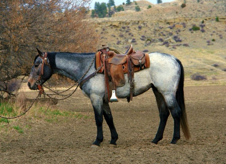 Image from http://www.horsesinmontana.com/files/horses/sage1.jpg.