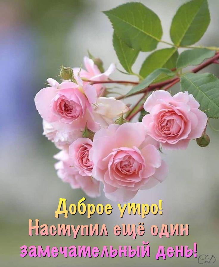 картинки с добрым утром с розами картинки день матери