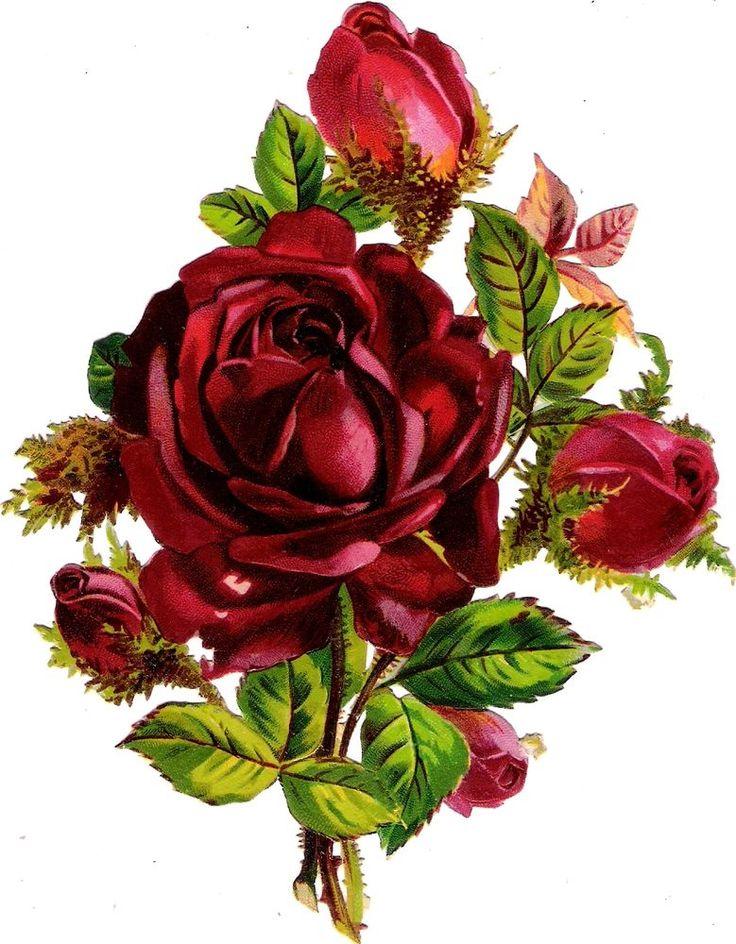 Oblaten Glanzbild scrap die cut chromo Rose 15,7 cm Blume flower fleur