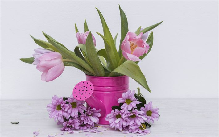 Download wallpapers pink tulips, spring decoration, gerberas, tulips, spring