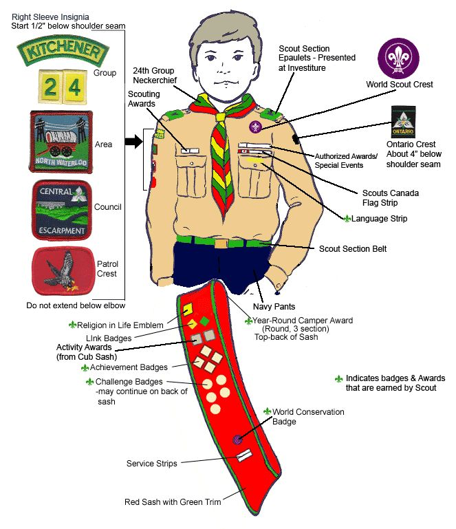Canada Sting Scout