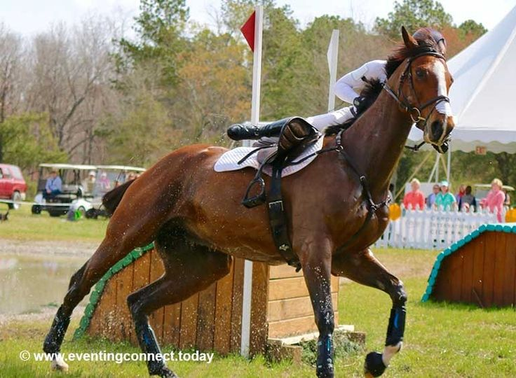 Ever wonder what your horse is thinking as you're kicking it around a massive course? Here's the answer... #RealityCheck #LOL