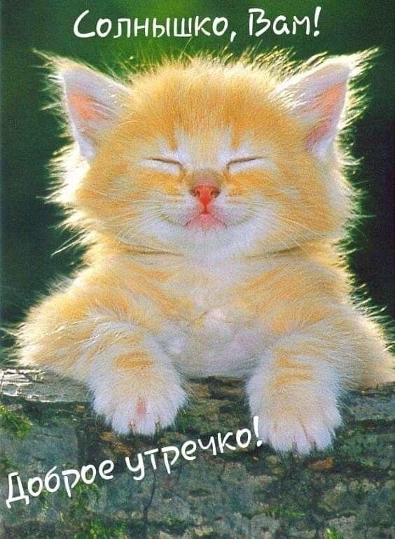 Прикольные открытки с животными доброго утра