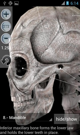 Anatomy Bones and Muscles v1.9.2  Requirements: Android 2.2+  Overview: It gives you information and graphics on the human skeleton. The graphics of the bones can be rotated so you can view them from different points of view (virtual 3D).