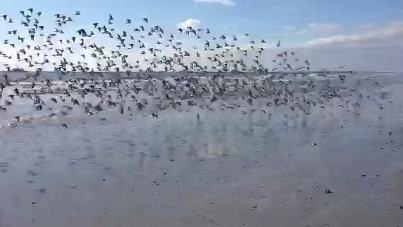 Beautiful wildlife at the north end of Brigantine Island