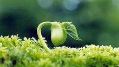 Alertas sobre germinação de sementes