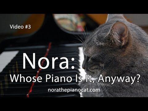 CATcerto. ORIGINAL PERFORMANCE. Mindaugas Piecaitis, Nora The Piano Cat - YouTube