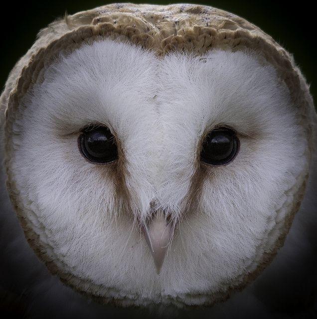 Owl Face by DickieK, via Flickr