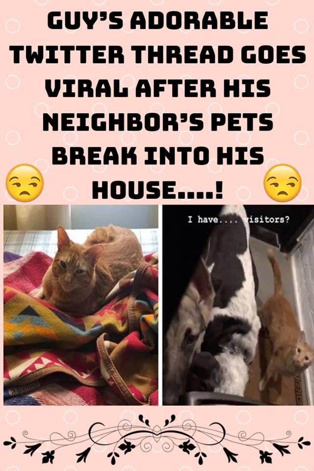 Guy S Adorable Twitter Thread Goes Viral After His Neighbor S Pets Break Into His House Pets Majestic Animals Animal Planet