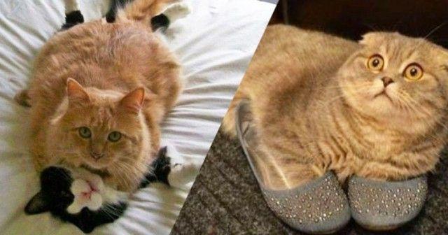 Неловкие моменты из жизни кошек - КОТОМАТРИЦА - На Амуре