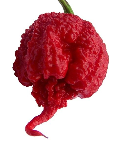 The Carolina Reaper…the hottest pepper on earth. 2,200,000 SHU (Scoville Heat Unit) rating. It even looks evil! (DS)