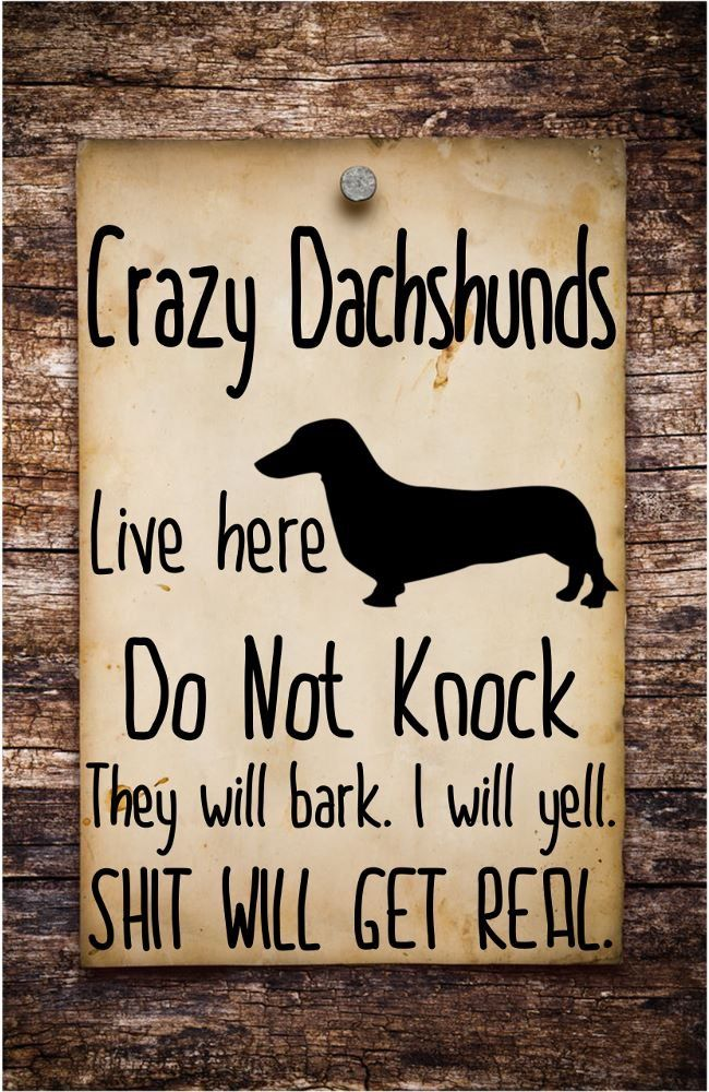 That S Exactly How I Feel When My Dachshund Barks Dachshund