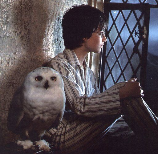 Harry and Hedwig. 8-)