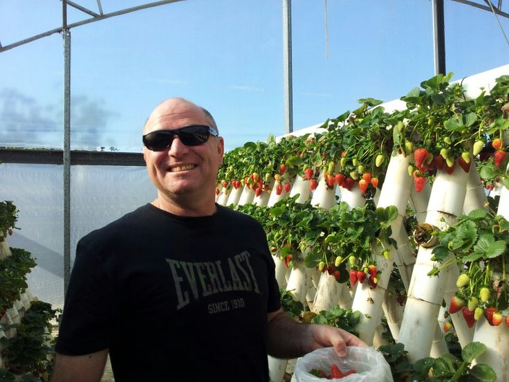 Had a great time here! Ricardos Tomatoes