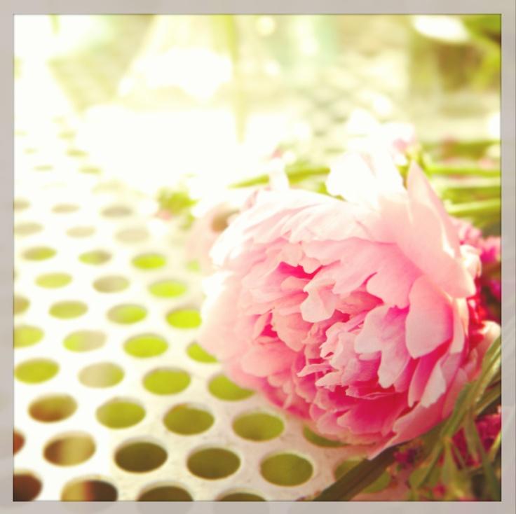 Dots meet florals. #LCLaurenConrad #Instagram #Kohls
