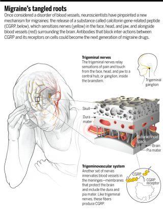 Migraine a future with antibodies