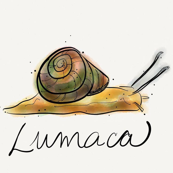 Lumaca - snail,  Lumace - snails