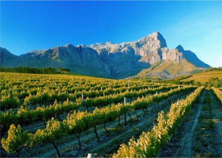 Nestled between towering mountains in the beautiful Cape Winelands lies the magnificent Franschhoek Valley.  This is the food and wine heartland of the country, where splendid wines are grown and top chefs create international cuisine with breathtaking scenery as a backdrop.