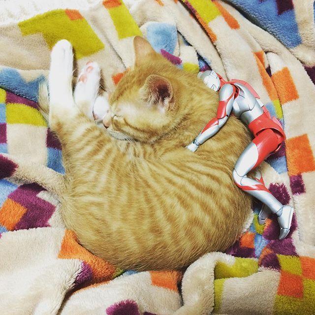 モフモフー #猫 #子猫 #cat #kitten