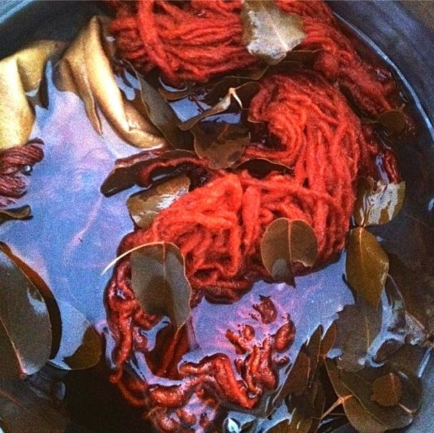 Natural dyeing with Eucalyptus cinerea