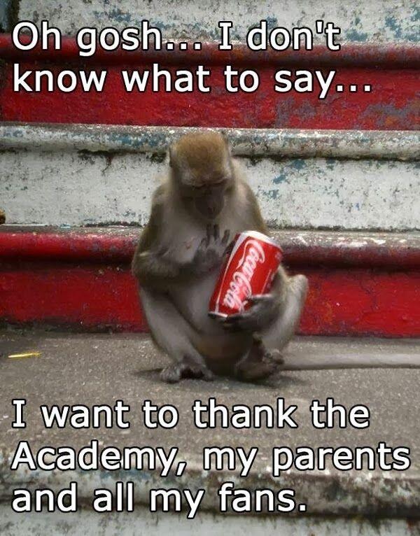 30 Funny animal captions - part 18 (30 pics), funny monkey meme, monkey receives award meme