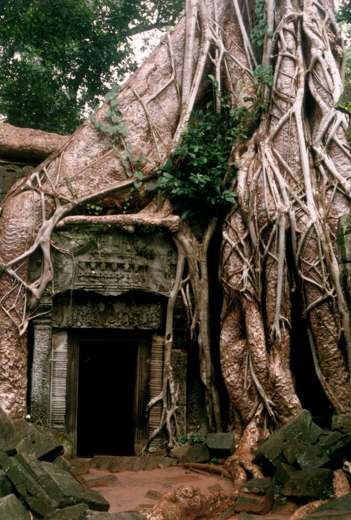 Angkormylove: Doors, Tree Houses, Trees Roots, Treehouse, Trees House, Silk Cotton Trees, Angkor Wat, Stories Inspiration, The Roots