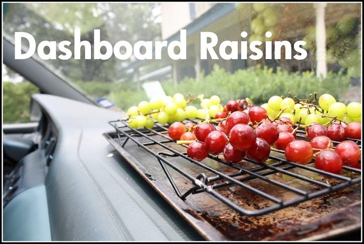 Free Fun in Austin: Make Sun Dried Raisins in Your Car