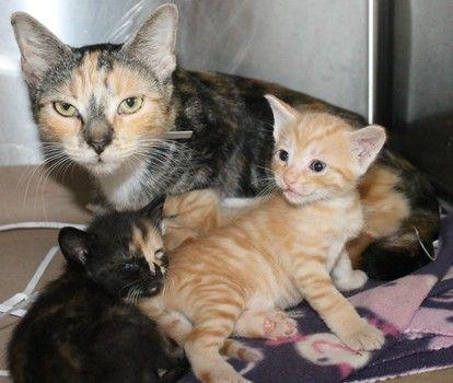 Greenville County Cat Rescue