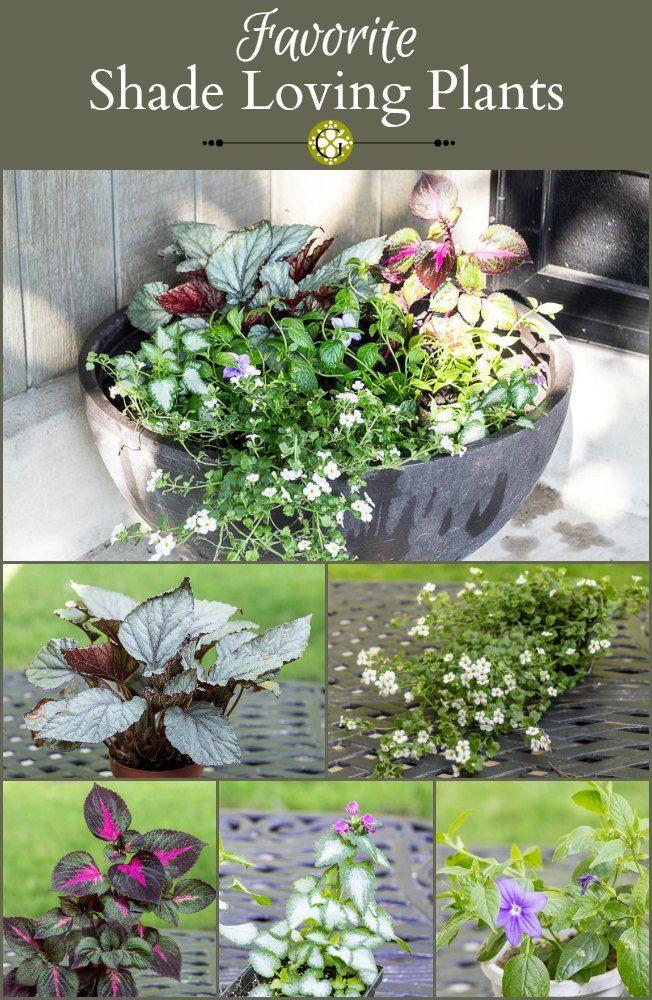 Favorite Shade Loving Plants collage ~ gardenmatter.com
