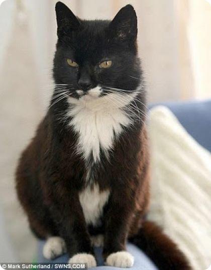 Creme Puff la gata que vivio 38 años