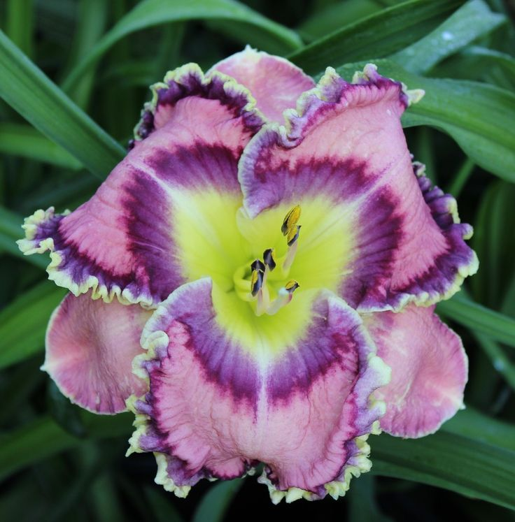 402 Best Lilies Images On Pinterest Beautiful Flowers