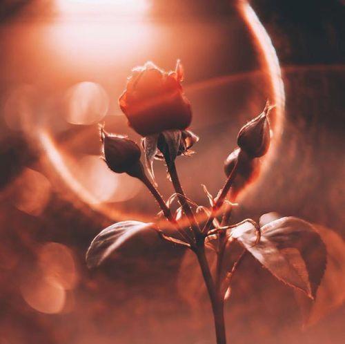 Считается что золотой час  самое лучшее время для съемки. Опоздай @consequence_s еще хотя бы на пару минут солнце уже не смогло бы создать такие сферы в линзе объектива. Canon EOS 5D Mark IV Фокусное расстояние: 85 mm Диафрагма: ƒ/1.5 Выдержка: 1/640 сек ISO: 100 #CanonPhoto #CanonRussia #LiveForTheStory via Canon on Instagram - #photographer #photography #photo #instapic #instagram #photofreak #photolover #nikon #canon #leica #hasselblad #polaroid #shutterbug #camera #dslr #visualarts…