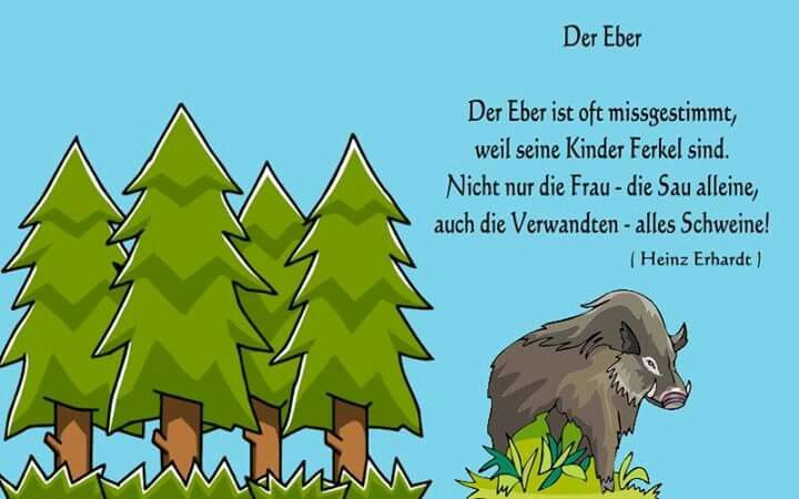 Pin von Gertrude auf Cartoons, Witze usw! | Heinz erhardt