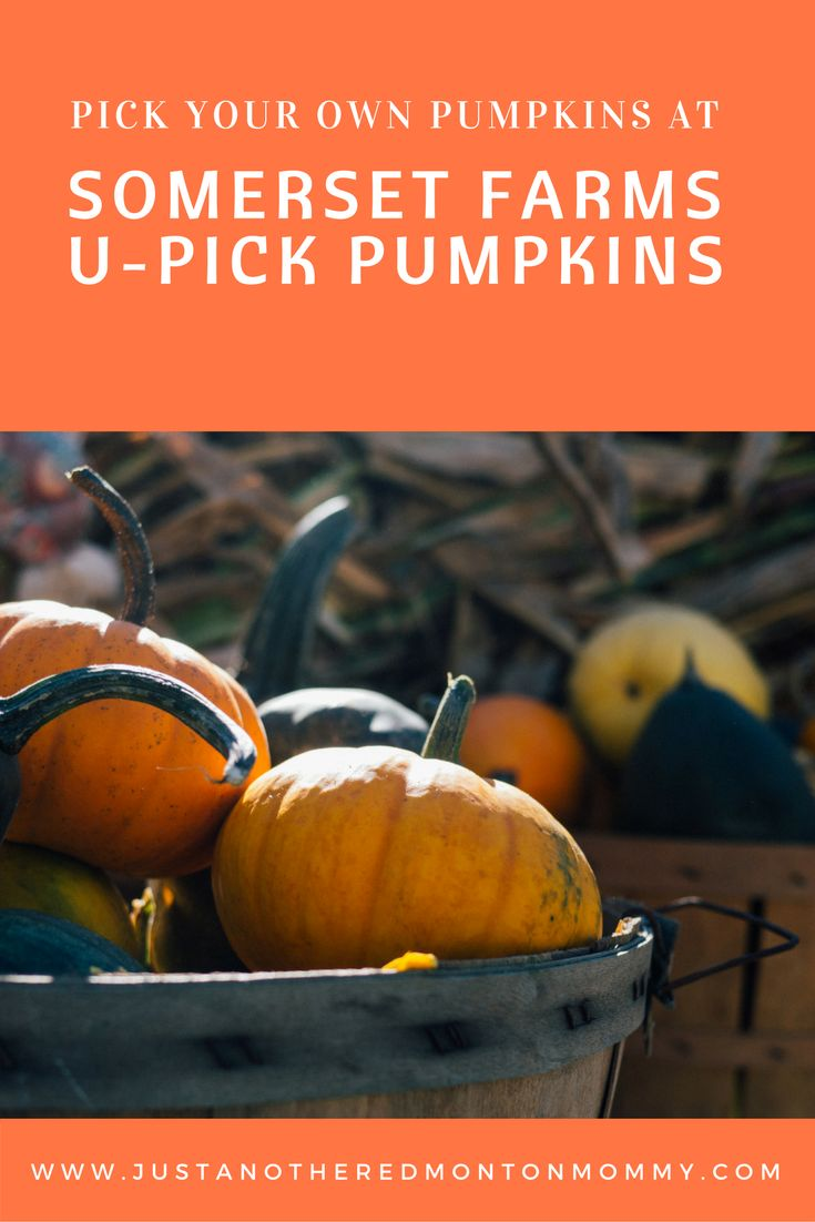 A fun family activity, and a great way to spend some time outdoors. Somerset Farms has many varieties of edible and decorative pumpkins to be picked that are available in different colour and sizes. #ExploreAlberta